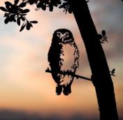 Metalbird - Steenuil