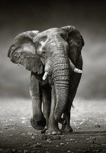KAKY ART - Elephant