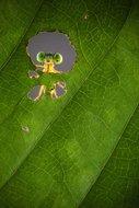 KAKY ART - Nature Frame
