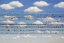 KAKY ART - Concerto for birds