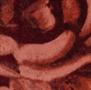 STITCHY ROSES ROUND VLOERKLEED - 175 cm
