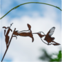 Metalbird - Kolibrie
