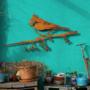 Metalbird - Kuifmees XXL