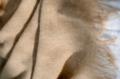 Plaid - Fly Almond