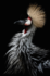 KAKY ART - Crowned Crane's Portrait_