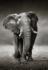 KAKY ART - Elephant_